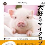 マイクロブタ好きで作る、初のマイクロブタ飼育本「#大好きマイクロブタさん」発売!