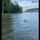 湖で溺れそうになり犬に救われた子鹿、翌朝に母鹿を伴って会いに来る(米)<動画あり>