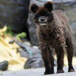 福島県内に出没する謎の生物はクマなのかイヌなのか? 日本ツキノワグマ研究所に聞いた