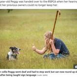 聴覚を失った9歳の牧羊犬、ハンドサインを覚えて見事復帰「何かを始めるのに遅すぎることはない」(英)
