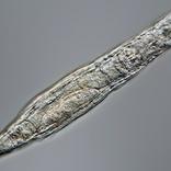 2万4000年間永久凍土で眠っていた生物が目覚める