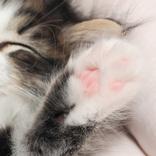 「診察台で緊張する猫はたいてい…」 獣医の投稿に反響 「そうだったのか」「知らなかった」