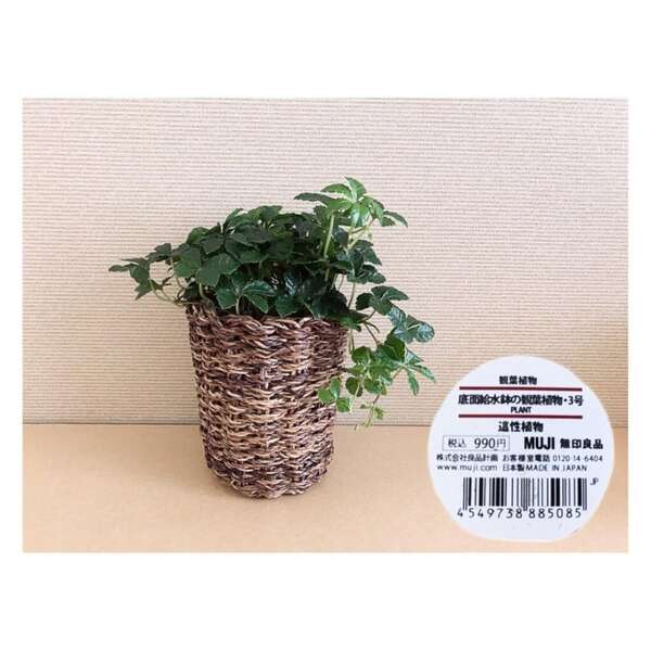 底面給水鉢の観葉植物