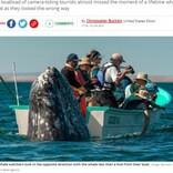 ホエールウォッチングボートの真後ろで巨大クジラが静かに「スパイホップ」(メキシコ)