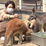 ハッチが亡くなって12年…相葉雅紀、再び須坂市動物園へ