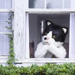 むぎ(猫)、夏休みスペシャル配信ライブの開催を発表