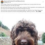4時間の説得にも応じず飛び降り寸前の女性 切り札で呼ばれたセラピー犬が一瞬にして救う(英)<動画あり>