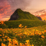 【まさに絶景】黄色い花が一面に咲き乱れる佐渡の夕焼けに「本当に日本とは思えない」「めっちゃ綺麗ですね」「ぜひ直接見てみたい風景」と絶賛の声