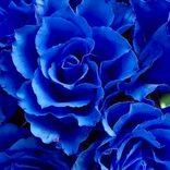 素敵な意味を持つ花言葉15選。お花を送る時などにプラスアルファの思いを込めて