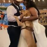 披露宴で新郎新婦がダンスをしていたら かわいい『乱入者』にほっこり