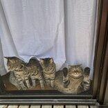 """溶けた猫が""""トド"""" 変形しすぎた兄貴、兄弟たちは他人のふり?「見なかったことにしよう」"""