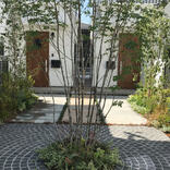 おすすめのシンボルツリーの選び方。うれしい効果と植えるいい場所をプロが解説