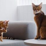"""飼い主がいないところで何してる?「IoT家電」で見守り楽しめる、愛犬&愛猫の""""意外""""な行動"""