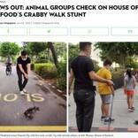 「生きたカニのクレーンゲーム」で炎上したシンガポールのレストラン、今度は路上を散歩させて非難殺到