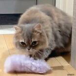 子猫だと勘違いして「あるモノ」を舐める猫が話題 その姿に「アホ可愛い」