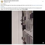 """""""イーにゃん・ハント""""出現 「脱走の達人」黒猫の凄技がほぼ『ミッション:インポッシブル』(米)<動画あり>"""