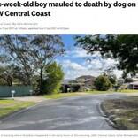 生後5週間の男児、飼い犬に襲われ死亡 数週間前には隣家の犬も襲われる(豪)