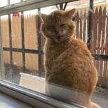 毎日、家にやってきた野良猫 保護した後のギャップにメロメロ