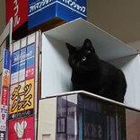 「脳が混乱する」 新宿の巨大猫 大型ビジョンからリアルに再現した結果?