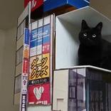 新宿の巨大猫を自宅で再現!ジオラマの完成度の高さに30万いいね