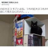 新宿の巨大猫を再現した動画が30万超いいねの大反響 「完全に実写」「猫さん尊い」