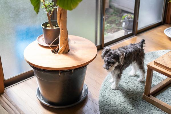 鉢カバー/プランターテーブルを使った観葉植物のディスプレイアイデア