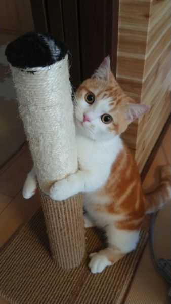 爪とぎ器をハグしている猫の姿が話題。
