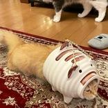 『蚊取りアーマー』を装備した猫 シュールな光景に「強そう」「笑った」