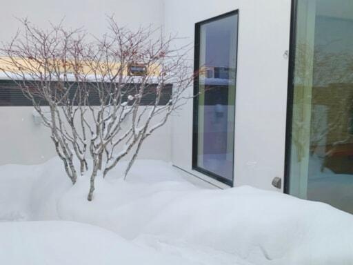 雪が積もった中庭