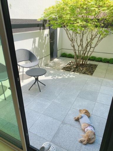 中庭で昼寝をする犬