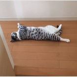 猫飼いにとっては夏の風物詩 「猫が落ちている」とは?