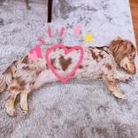 みんなを幸せにする愛犬のハートマーク 「良い事がいっぱい訪れそう」