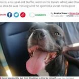 夏のビーチに呼ばれて? バスに乗って出かけた笑顔の愛犬をSNSで発見、飼い主は唖然(英)