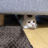 ソファの下からひょっこり キレイな車庫入れを披露した愛猫