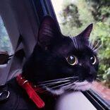 石垣島の保護猫がドライブに興味津々 「遠くをみつめる視線がかわいい」