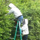 害虫駆除業者だけではない ミツバチ駆除に養蜂家が良い理由を経験者に直撃