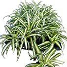 お手入れ簡単! デスクで映えるおすすめ観葉植物