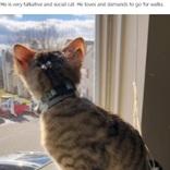 4つの耳を持つ珍しい猫、「おしゃべりでいたずら好き」と飼い主(米)<動画あり>