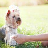 小さな愛犬が10歳の飼い主を野生動物から防護 「ヒーロー犬」と話題に