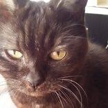 愛猫が23歳でガンに。もう声も出せない子が「ニャッ」と返事してくれた日