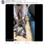 【猫おもしろ画像】可愛すぎ…!猫たちの奇跡の瞬間14選
