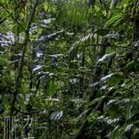 『カナルタ 螺旋状の夢』アマゾン奥地に1年滞在 神秘の世界を映す予告編公開