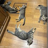 晩ご飯の支度を阻む集団 キッチンでリラックスする猫達の姿がかわいいと話題に
