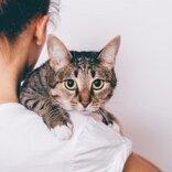夢占い|人間関係や恋愛の駆け引きを表す「猫」の夢。あなたが見た夢の意味