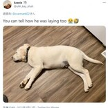 ルンバが残した犬の軌跡に大笑い 怠惰すぎる犬に「もはやアート」(米)