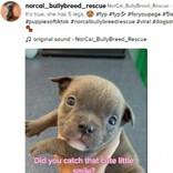 5本脚で誕生した子犬、飼い主に引き取り拒否されるもSNSで大人気に(米)