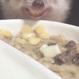 ハリネズミの写真に15万人が爆笑 食事中の、衝撃の1枚