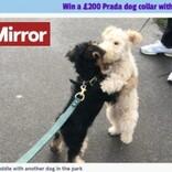 ハグが大好きな生後7か月の犬、初対面の犬も抱きしめちゃう!(英)