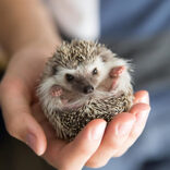 ひとり暮らし・賃貸でも飼いやすい♡おすすめ小動物ペット5選