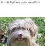 毛が伸び放題だった保護犬 トリミング後のビフォーアフターの姿が「アニメから出てきたみたい」(米)